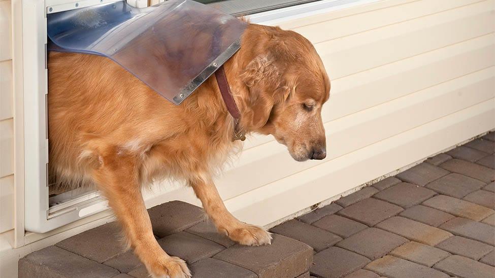 Hund durch Hundeklappe