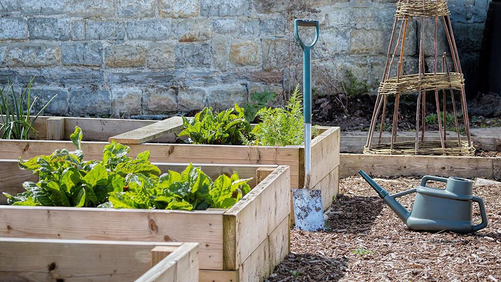 Gemüsegarten mit Spaten, Gieskanne und in Teilgärten eingeteiltem Gemüse