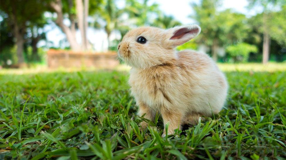 Haustier Kaninchen auf dem Gras