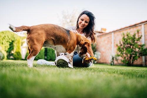 Frau spielt mit Haustier - einem Hund - im Garten