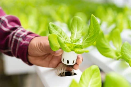 Indoor Garten mit Smart Gardening