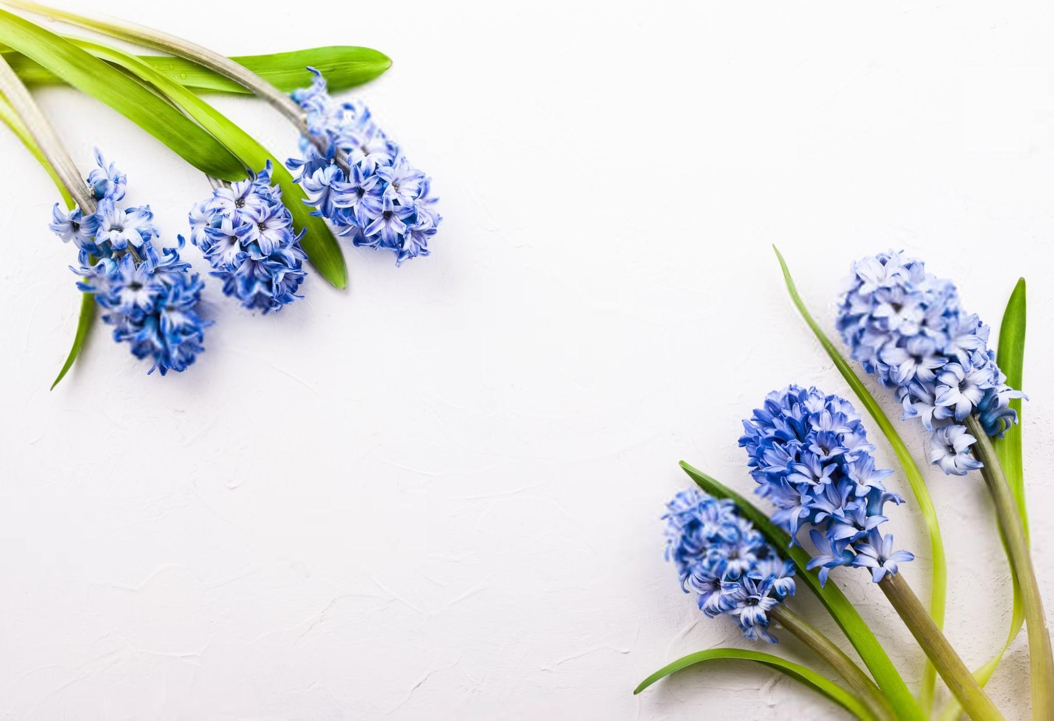 Pflanzen im Schlafzimmer - die 7 besten Exemplare für deinen ...