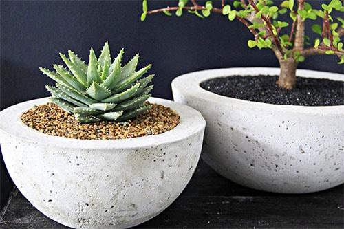 2 Pflanzen in Beton Deko Kübel