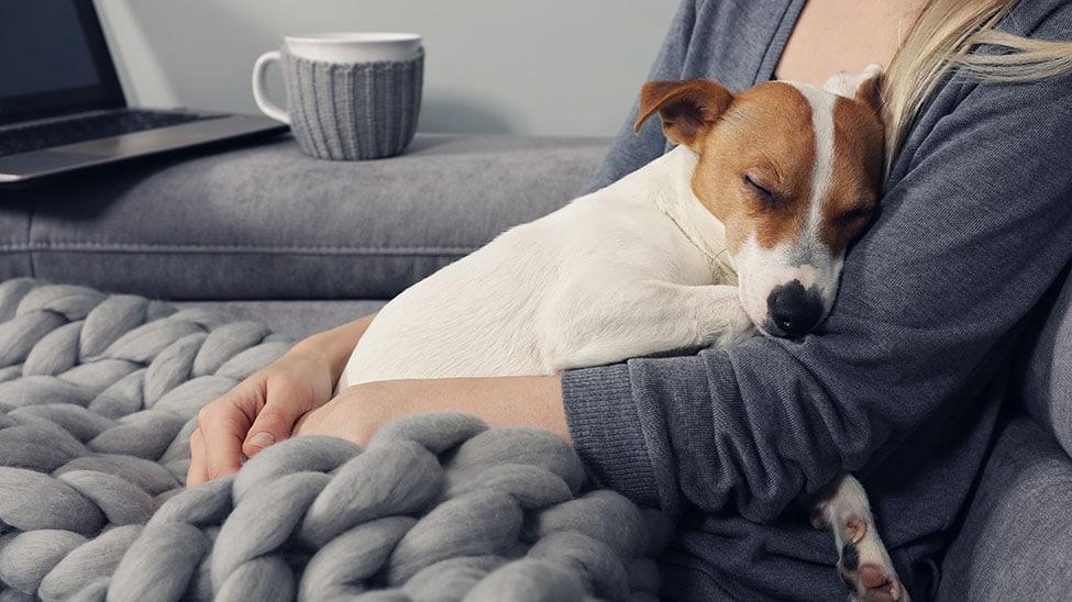Hund mit Schnupfen auf Decke bei Frauchen