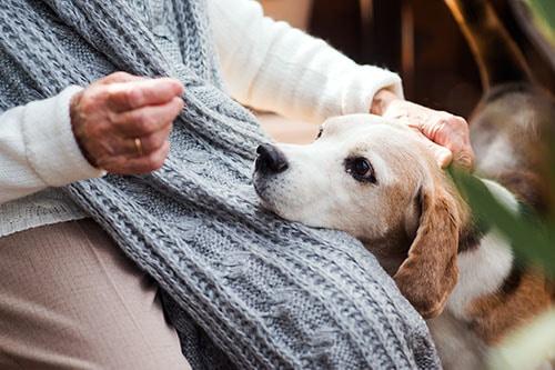 Hund mit Schnupfen sitzt bei Frauchen