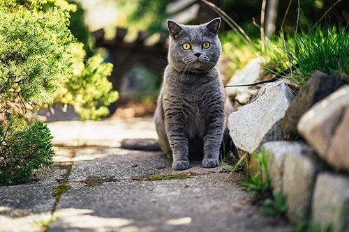 Katze erziehen mit Leine