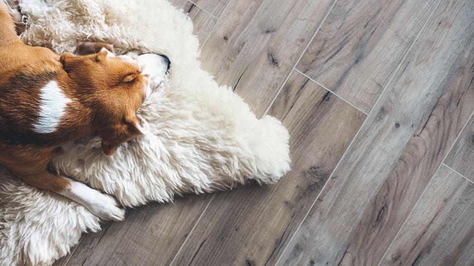 Hund auf hellem Lammfell