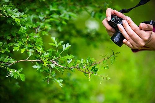 Mit Kompaktkamera im Garten fotografieren