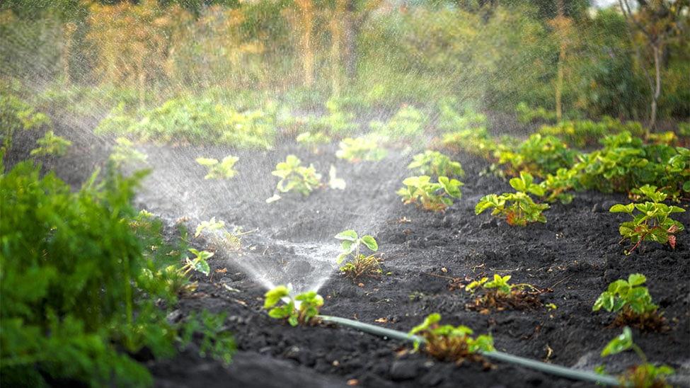 Sprinkler in Garten