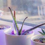 LED Pflanzenlampe am Fenster