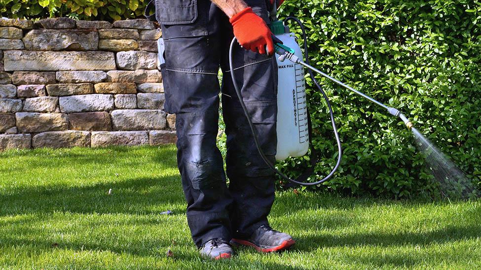 Mann besprüht Hecke in Garten mit Rasenunkrautvernichter