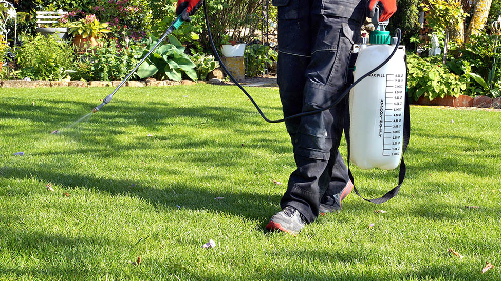 Mann besprüht Rasen mit Rasenunkrautvernichter