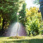 Mann besprüht in Garten Pflanzen mit Rasenunkrautvernichter