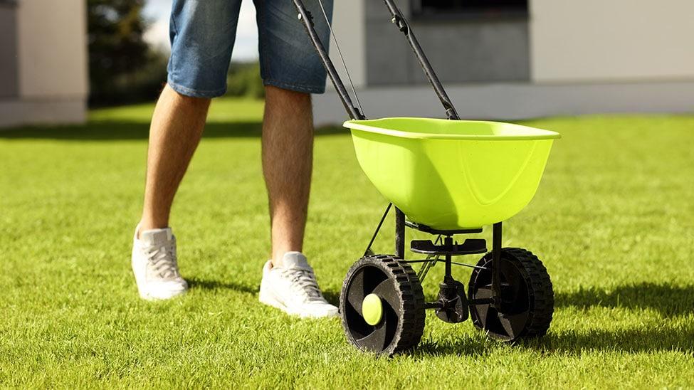Mann verstreut Rasensamen auf Rasen in Garten