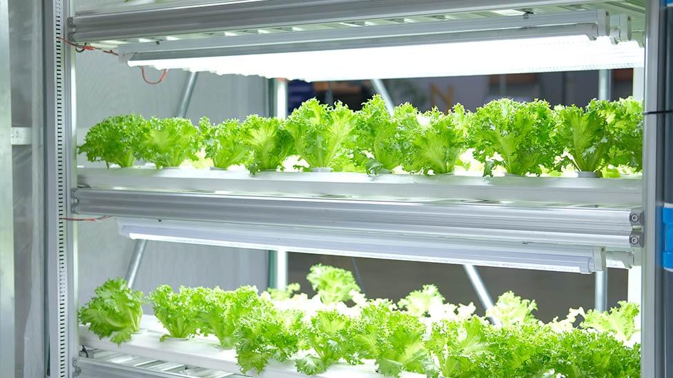Mehrstöckige LED Pflanzenleuchte