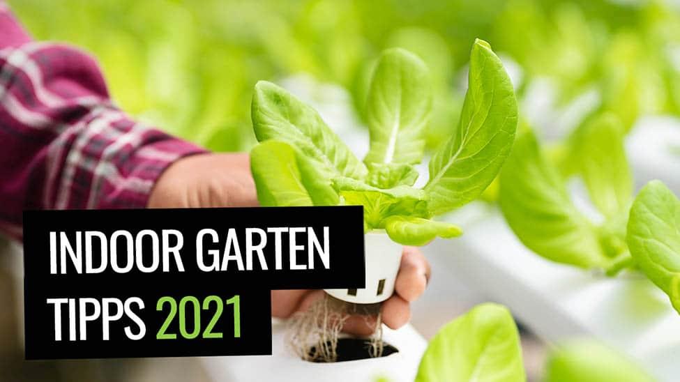 Indoor Garten mit Smart Gardening - Indoor Garten Tipps
