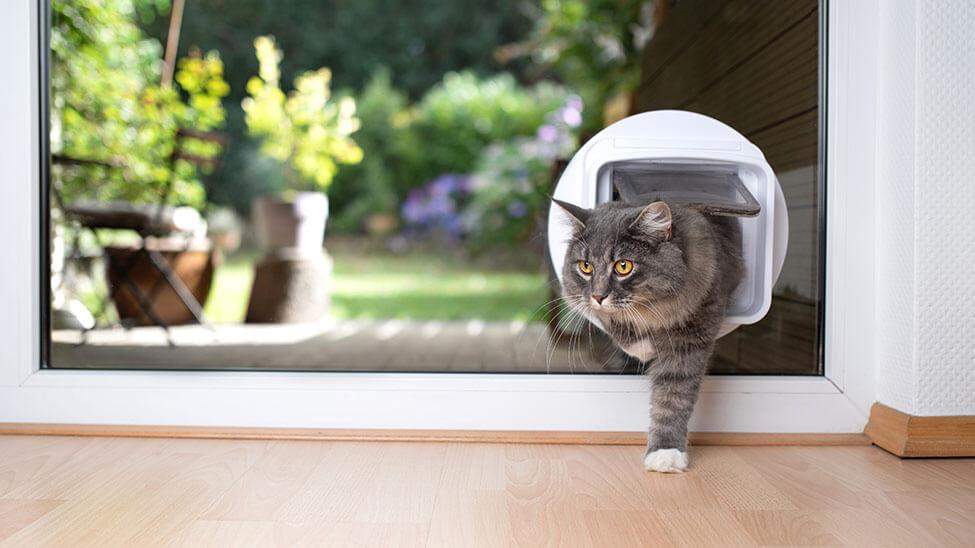 Dunkle Katze betritt Haus durch Katzenklappe