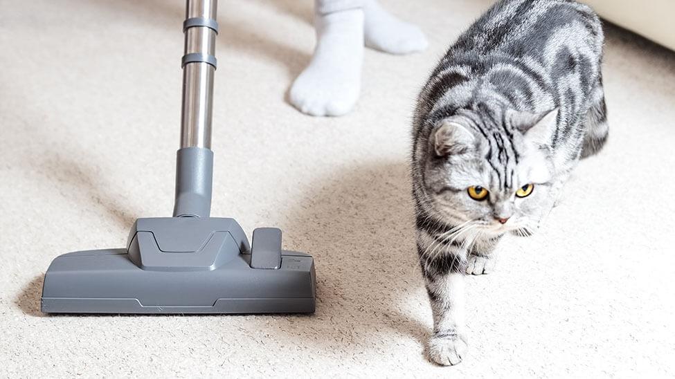 Frau putzt neben Katze mit Staubsauger für Tierhaare