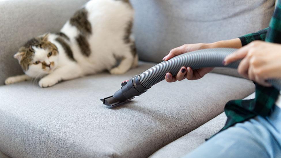 Frau putzt neben Katze mit Staubsauger für Tierhaare auf Sofa