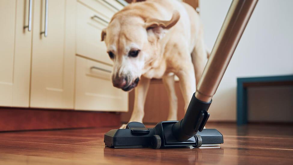 Frau putzt vor Hund mit Staubsauger für Tierhaare