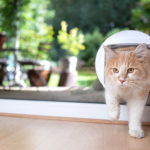 Katze betritt Haus durch Katzenklappe
