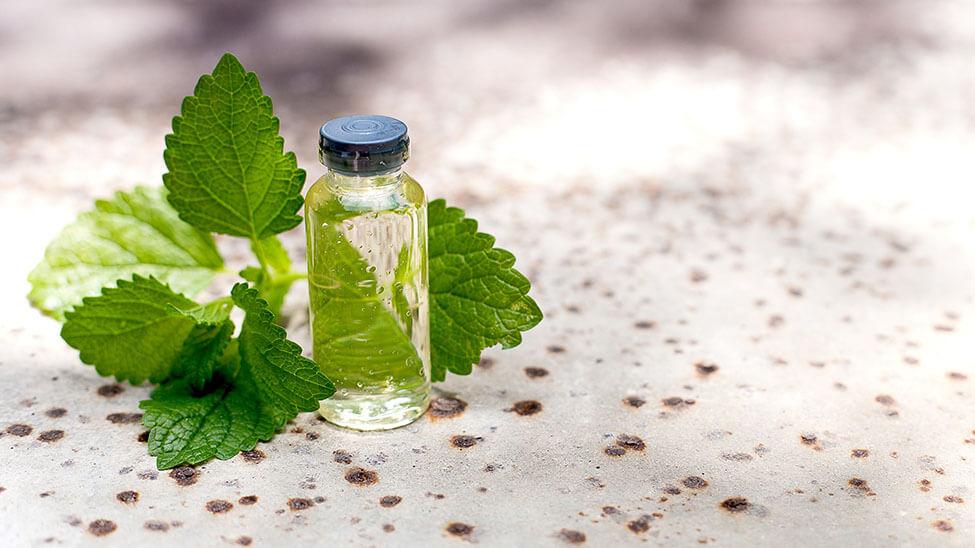 Kleine Flasche mit Öl und Minze