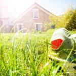 Rasenkantenschneider in Garten