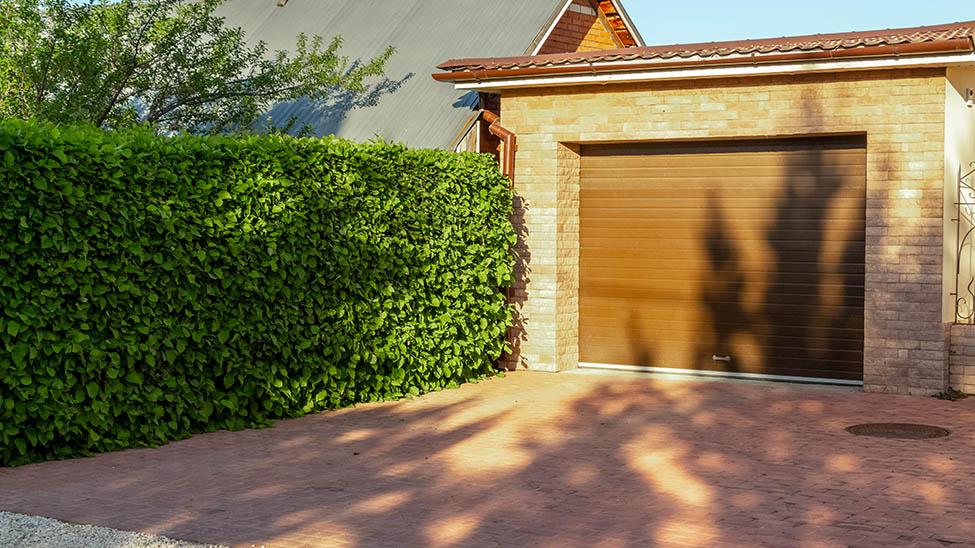 Hecke als Garten Sichtschutz